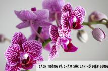 Cách trồng và chăm sóc Lan Hồ điệp đúng kỹ thuật